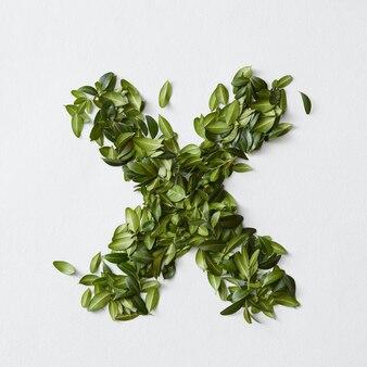 Koncepcja alfabetu angielskiego. alfabet na białym tle. litery abc z zielonych liści. litera x reprezentowana przez zielone liście. symbol x