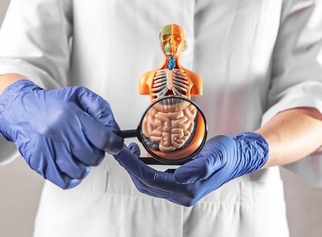 Koncepcja badania i diagnostyki jelit i układu pokarmowego chorób wewnętrznych jelit