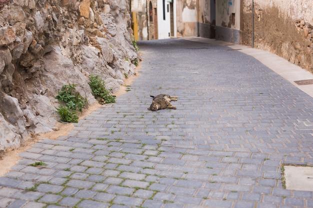 Koncepcja bezdomnych zwierząt - ładny kot na zewnątrz