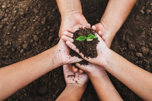 Koncepcja eco ręka pomagając gospodarstwie ochrony młodych roślin