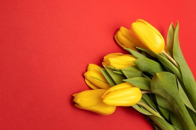 Koncepcja gratulacje na wakacje dzień matki, walentynki. żółte tulipany czerwone tło. skopiuj miejsce, mock up. zdjęcie z bliska