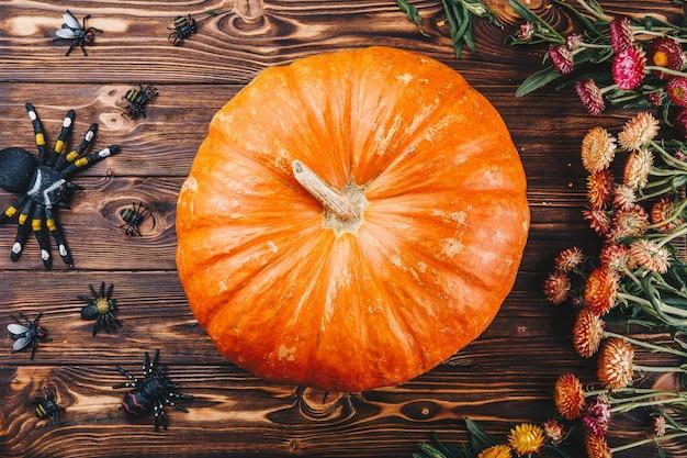 Koncepcja halloween ze świeżymi dyniami, pająkami i robakami z kwiatami. cukierek albo psikus widok z góry
