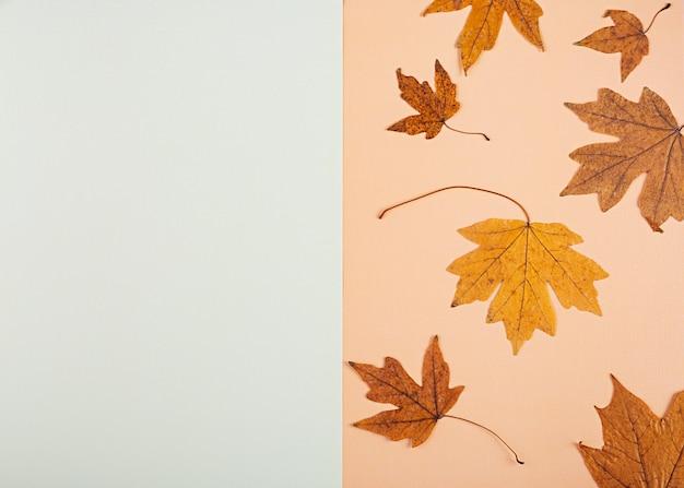 Koncepcja jesień. suszone liście w pastelowych kolorach. widok z góry
