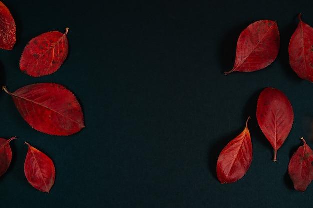 Koncepcja jesień. tło z pięknych czerwonych liści na czarnym tle. miejsce na tekst.