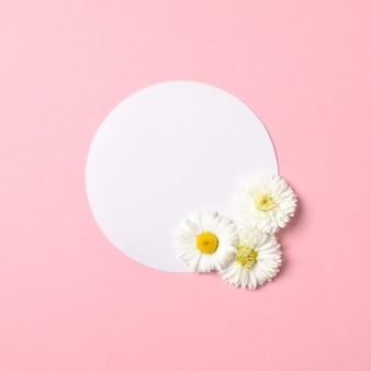 Koncepcja minimalistyczna wiosna natura. kwiaty stokrotki i biała kartka papieru w kształcie koła na pastelowym różowym tle. kompozycja płasko świeckich z miejsca kopiowania.