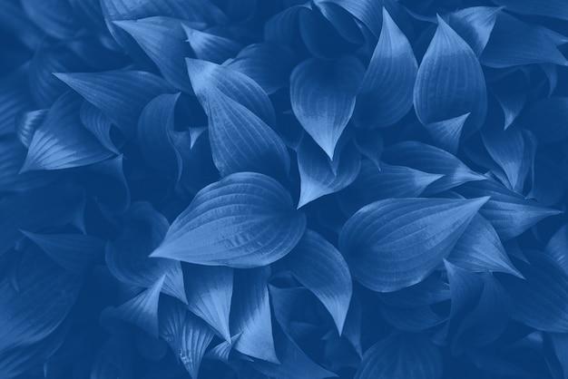 Koncepcja natury. widok z góry. zieleń opuszcza teksturę w monochromatycznym kolorze. modny niebieski i spokojny kolor. tropikalny liść tło.