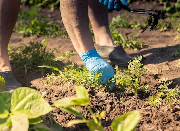 Koncepcja odchwaszczania nóg rolnika i dłoni w rękawicach usuwających chwasty z gleby w zielonym ogrodzie warzywnym w ...