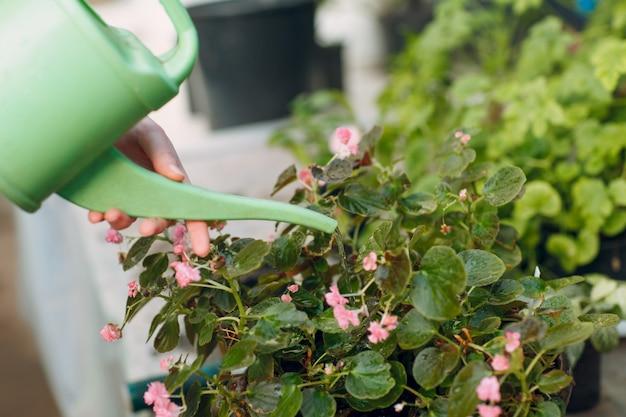 Koncepcja ogrodnictwa domowego. wręcza kobiety z podlewanie puszki sadzenia roślinami. wiosenna przydomowa roślina ogrodowa.