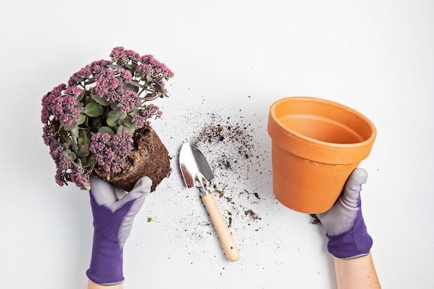 Koncepcja ogrodnictwa domowego z sadzeniem soczystych roślin