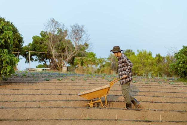 Koncepcja ogrodnicza młody rolnik płci męskiej pchający wózek ogrodniczy wśród działek warzywnych w swoim małym spokojnym ogrodzie.