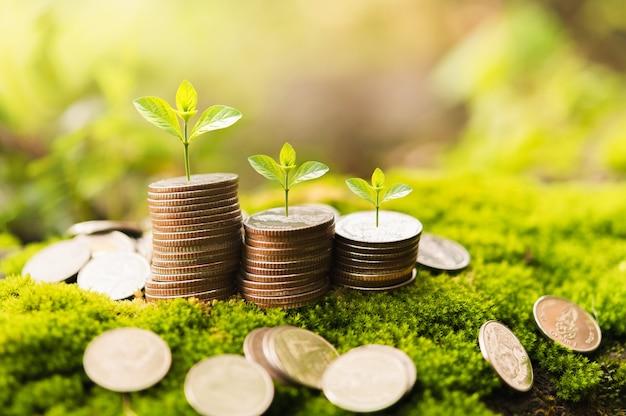 Koncepcja oszczędzania pieniędzy. stos monet z małym rosnącym drzewem. koncepcja finansów i rachunkowości