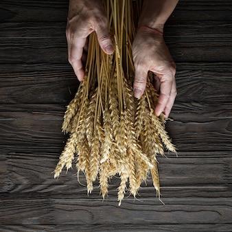 Koncepcja piekarni. kłoski ziarna w rękach kobiet. pieczenie chleba