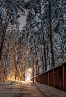 Koncepcja piękna zima. drzewa pokryte śniegiem w nocy z latarniami ulicznymi