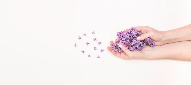 Koncepcja pielęgnacji dłoni, krem przeciwzmarszczkowy, przeciwstarzeniowy, spa. piękne damskie dłonie z kwiatami bzu na białym tle, widok z góry, baner.