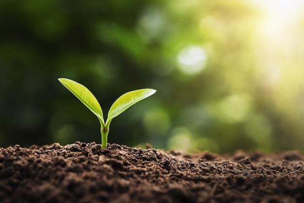 Koncepcja sadzenia rolnictwa. młode drzewo rosnące na ziemi w świetle poranka
