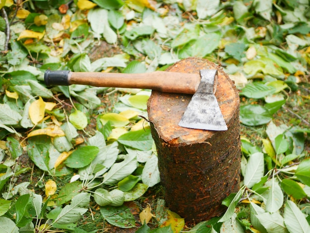 Koncepcja ścinki drzew. wylesianie. obraz koncepcji wylesiania składający się z wyciętych drzew leśnych.
