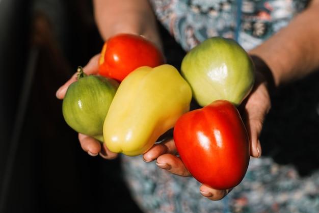 Koncepcja światowego dnia wegetariańskiego. zbliżenie warzyw w kobiece ręce, papryka, czerwone i zielone pomidory widok z góry. żniwny