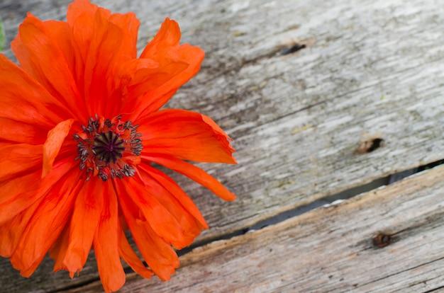 Koncepcja święto narodowe amerykańskiego święta. drewniana przestrzeń z czerwonym kwiatem maku. miejsce pamięci kwiatów maku