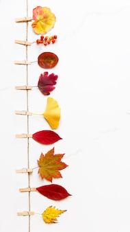 Koncepcja upadku. widok z góry na jesienne liście - brzoza, klon japoński, ginkgo na sznurku z spinaczami do bielizny na powierzchni białego marmuru. leżał na płasko