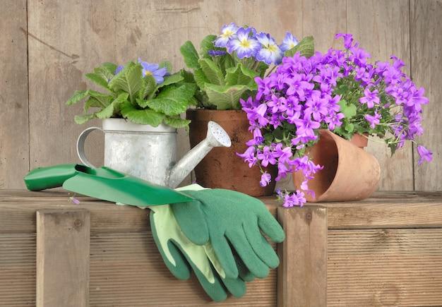 Koncepcja wiosennego ogrodnictwa