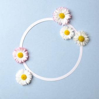 Koncepcja wiosennych wakacji. kreatywny układ złożony z kwiatów stokrotki i pustego konturu karty w kształcie koła na pastelowym niebieskim tle.