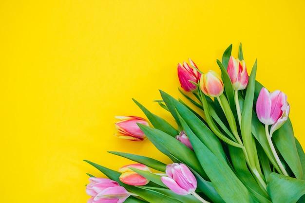 Koncepcja wiosna. różowe i czerwone tulipany na żółtym tle. skopiuj miejsce, mieszkanie świeckich.