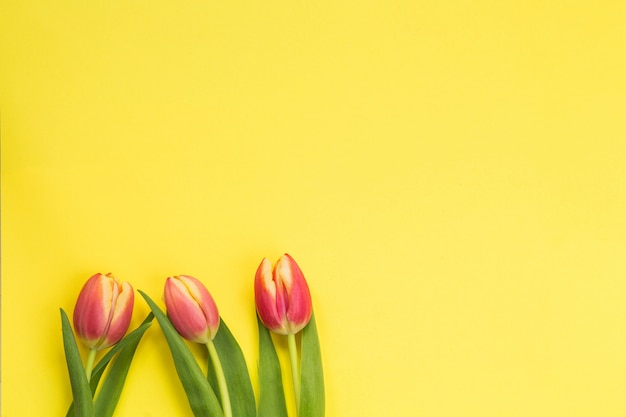 Koncepcja wiosny. tulipany z żółtym tle, miejsca na tekst, kwietnia koncepcja wielkanoc