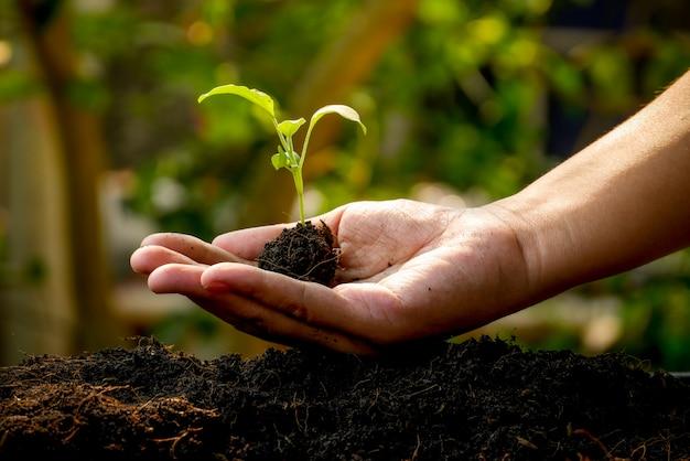 Koncepcja wzrostu, ręce sadzą sadzonki w glebie