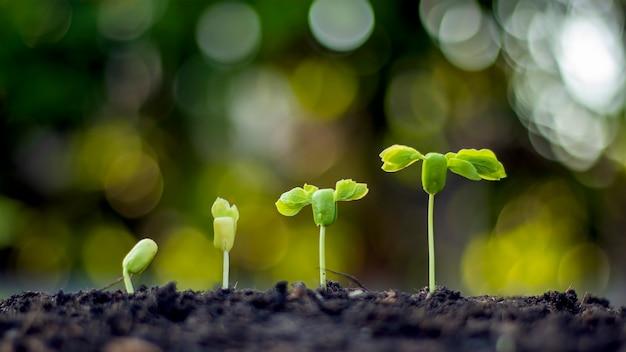 Koncepcja wzrostu roślin, rośliny rosnące na ziemi.