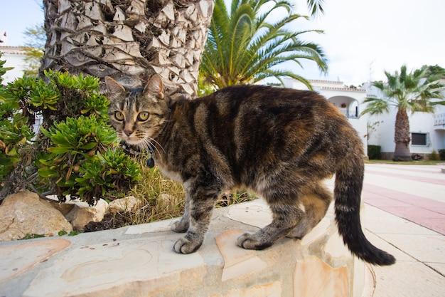 Koncepcja zwierząt domowych i domowych - ładny kot chodzący po ulicy w obroży.
