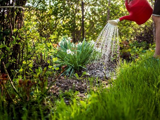 Konewka z wodą w ogrodzie w letni dzień