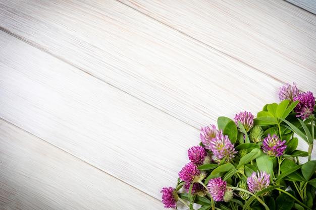 Koniczyna kwitnie na drewnianym stole. koniczyna jest stosowana w medycynie oficjalnej i tradycyjnej. leżał płasko