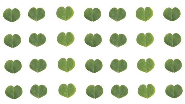Koniczyna pozostawia wzór serca