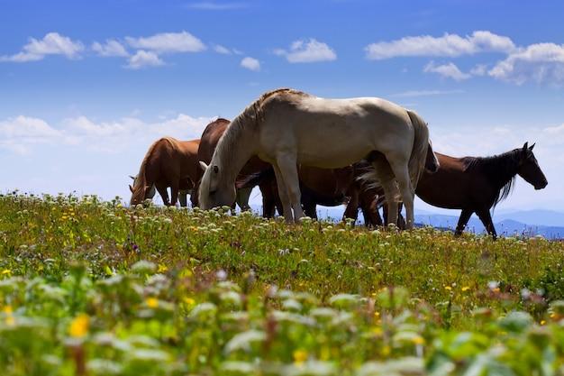 Konie na górach łąki