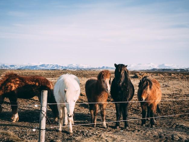 Konie o różnych maściach stojące na pastwisku