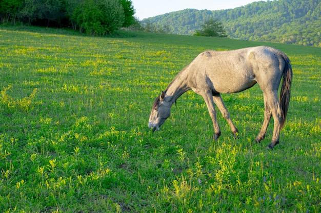 Konie pasą się latem w górach