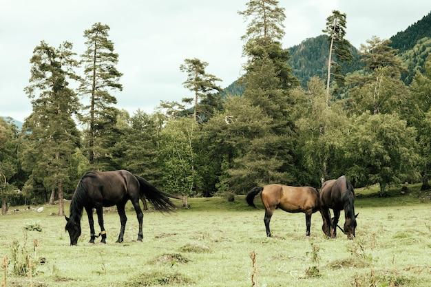 Konie pasą się na łące na tle gór