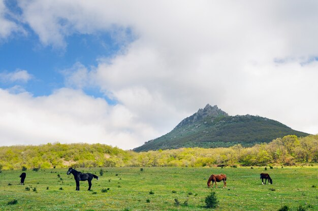 Konie pasą się na zielonym trawniku na skalistych górach i błękitnym niebie z chmurami