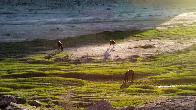 Konie pasące się nad małą rzeką w górach