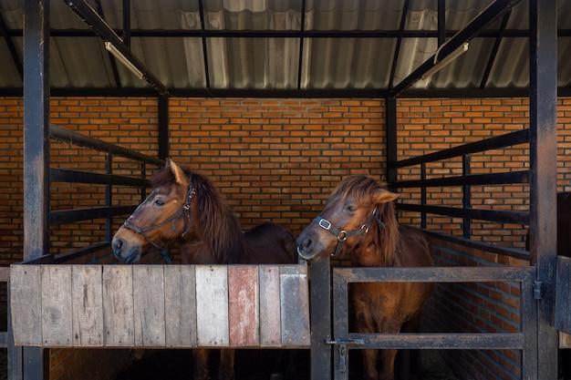 Konie stoją i relaksują się w stajni.