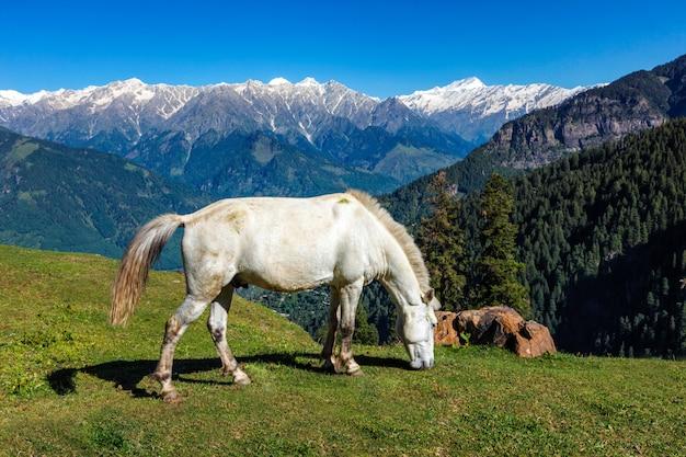 Konie w górach. himachal pradesh, indie