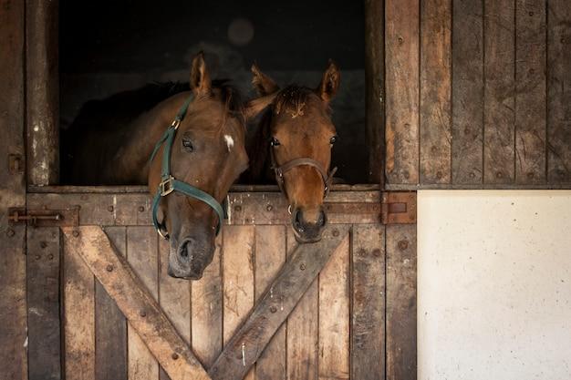Konie w stajni, z widokiem.