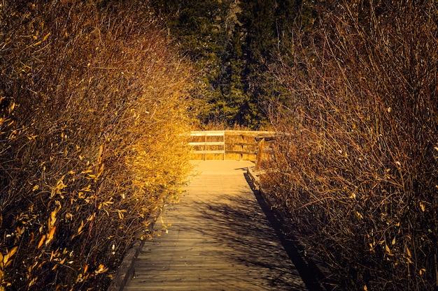Koniec szlaku do stawów bobrowych w rocky mountain national park w kolorado