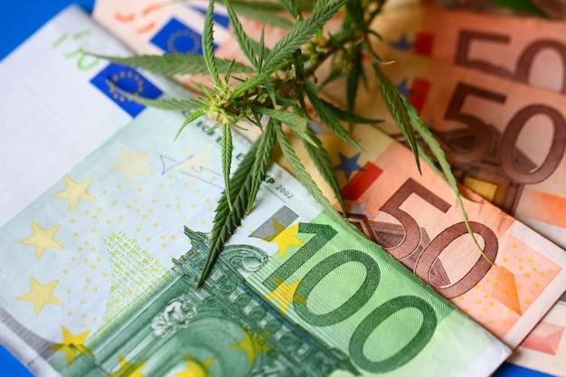 Konopie indyjskie, zioło do palenia, thc i cbd - kwiat marihuany i haszysz nielegalne za pieniądze z euro. marihuana uzależniająca od dymu