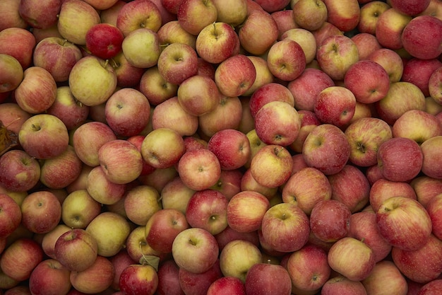 Konsystencja czerwonych jabłek: dużo czerwonych jabłek zebranych do pojemników w momencie ich zbioru w fazie produkcji. przechowywanie jabłek.