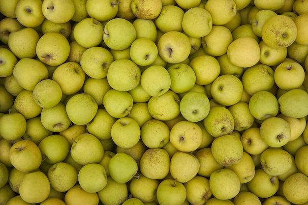 Konsystencja zielonych jabłek: dużo zielonych jabłek zebranych do pojemników w momencie ich zbioru w fazie produkcji. przechowywanie jabłek.