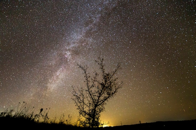 Kontrastowa sylwetka drzewa na ciemnym gwiaździstym niebie, galaktyce drogi mlecznej i odległym horyzoncie