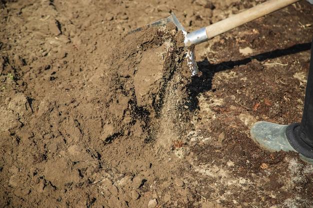 Kopać łopatę ogrodową. prace ogrodowe. selektywne skupienie.