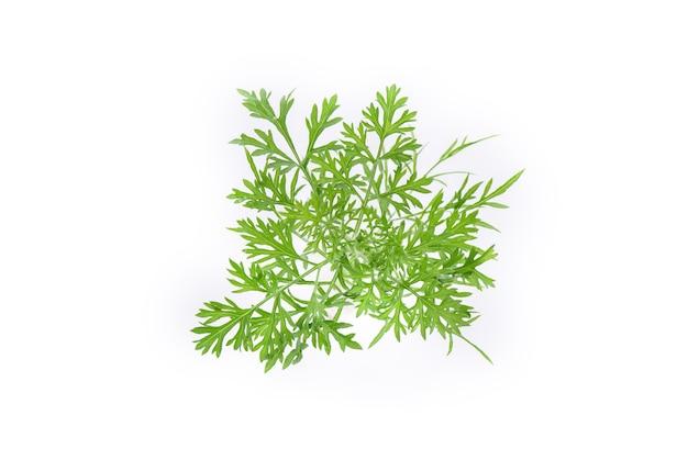 Koperek zielone liście na białym tle na białej powierzchni. widok z góry.