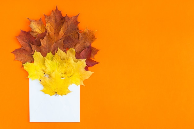 Koperta z suszonymi jasnymi jesiennymi liśćmi na pomarańczowym stole